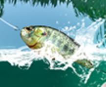 เกมส์ตกปลาทะเลสาป Fishing Simulator
